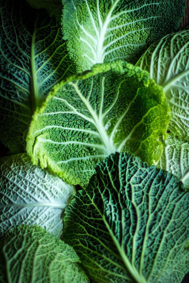 Stillleben: grüne Wirsing kohlblätter