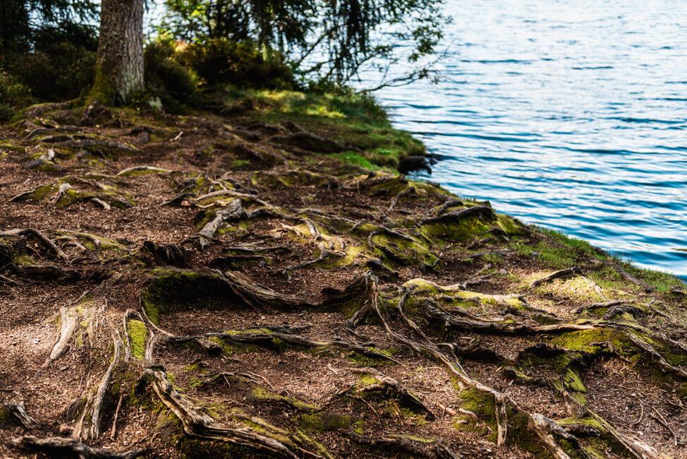 Etang de la Gruere Wanderung Spaziergang Wald Natur