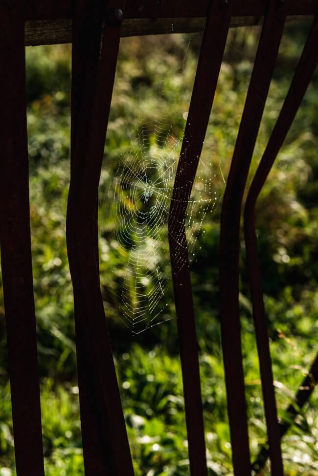 Val de Travers Spinnennetz Morgentau