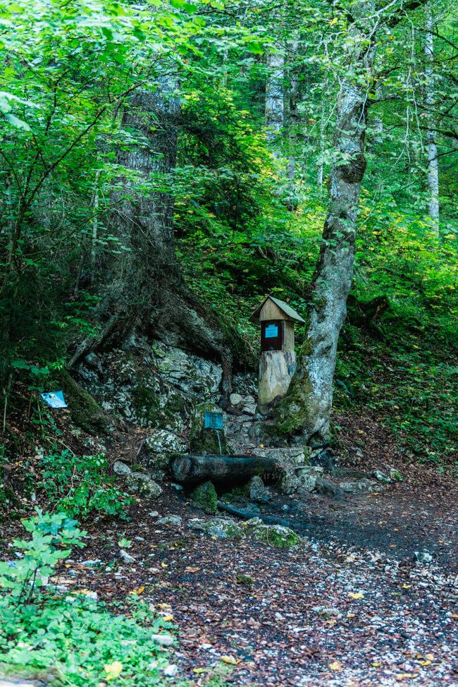 Chemin de la Fontaine A Louis Absinth Brunnen Wald Wandern Val de Travers
