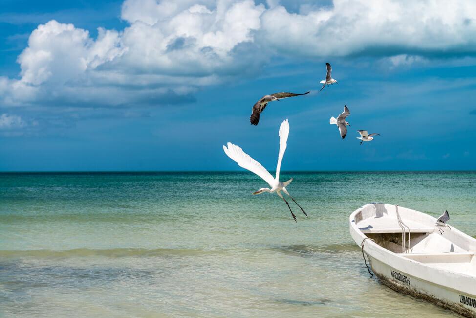 Isla Holbox Mexiko weißer Sandstrand Traumstrand Meer Boote türkisblaues Meer Karibik Möwen Reiher