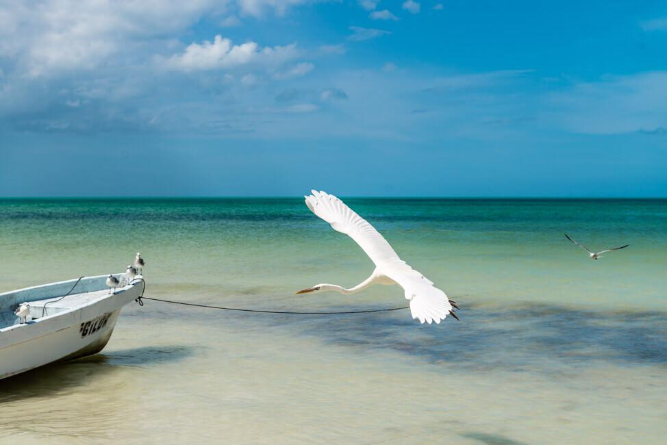 Isla Holbox Mexiko weißer Sandstrand Traumstrand Meer Boote türkisblaues Meer Karibik Möwe Reiher