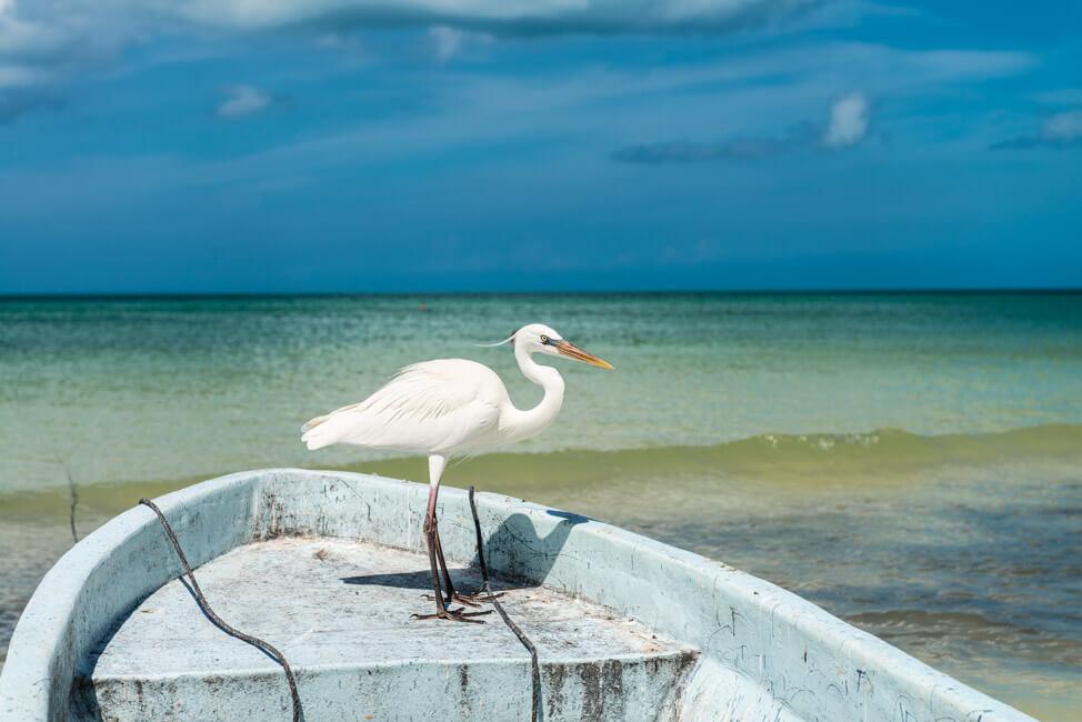 Isla Holbox Mexiko weißer Sandstrand Traumstrand Meer Boote türkisblaues Meer Karibik Reiher Fischerboot