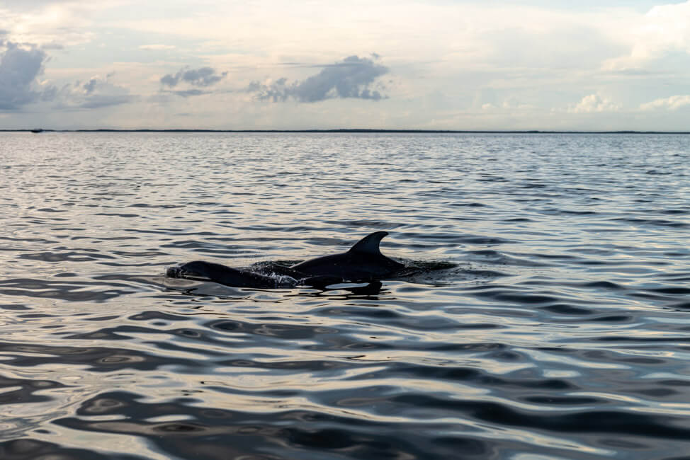 Isla Holbox Mexiko türkisblaues Meer Karibik Cabo Catoche Bootstour Ausflug Delfine in der Lagune