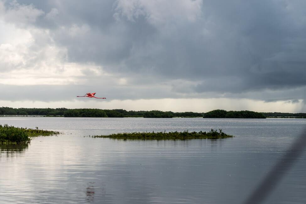 Isla Holbox Mexiko türkisblaues Meer Karibik Cabo Catoche Bootstour Ausflug Flamingo