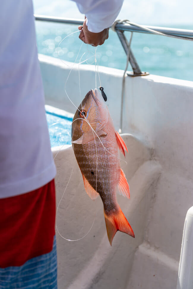 Isla Holbox Mexiko türkisblaues Meer Karibik Cabo Catoche Bootstour Ausflug selbst fischen Ceviche Angeln Red Snapper