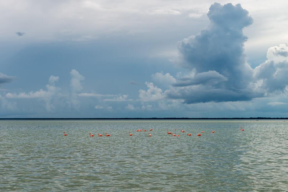 Isla Holbox Mexiko türkisblaues Meer Karibik Cabo Catoche Bootstour Ausflug Flamingos
