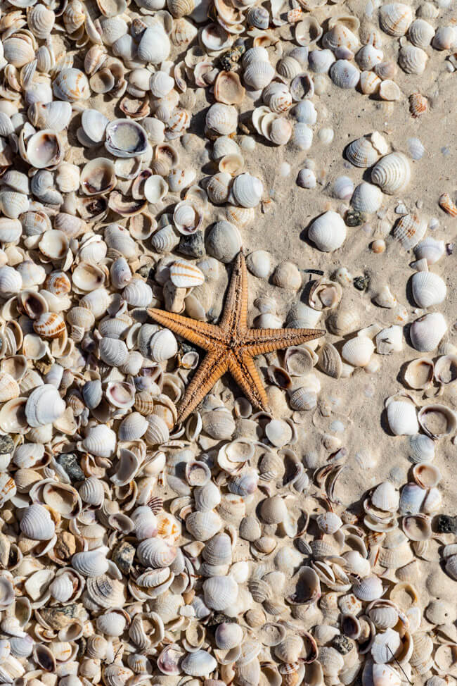 Isla Holbox Mexiko Muscheln Strand Seestern