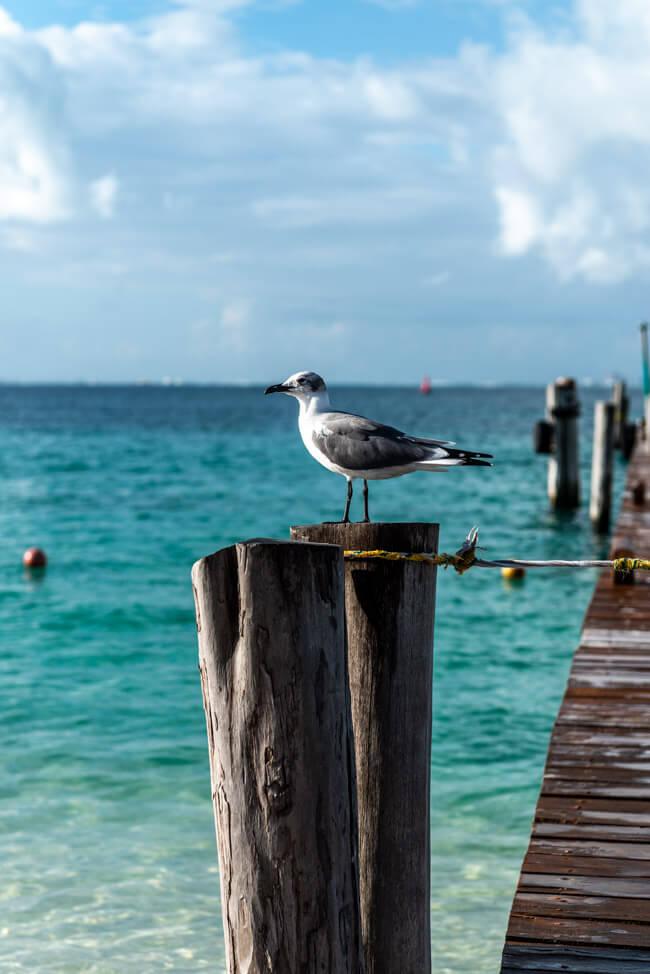 Mexiko Isla Mujeres Karibik Insel Playa Norte türkisblaues Meer Steg Möwe