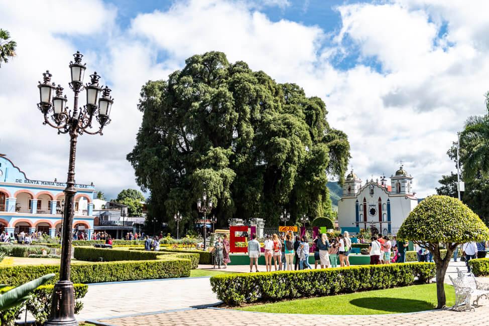 Oaxaca de Juaréz Mexiko El Tule