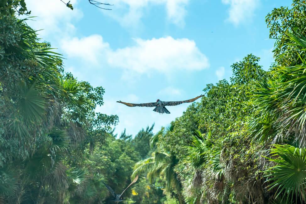 Punta Allen Sian Ka´an Nationalpark Lagune Meer Truthahngeier