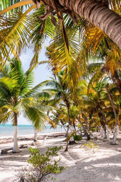 Punta Allen Sian Ka´an Nationalpark Meer Strand Traumstrand Palmen
