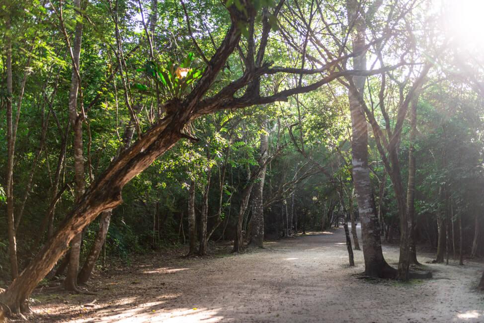 Ruinen von Coba Quintana Roo Yucatan
