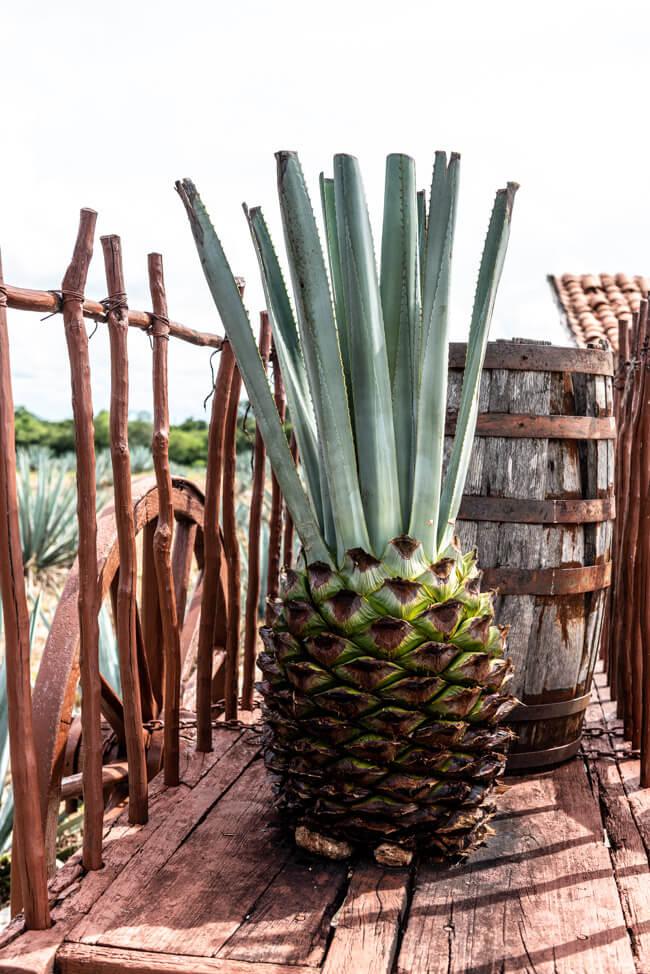 Mayapan Distillery Blaue Agave