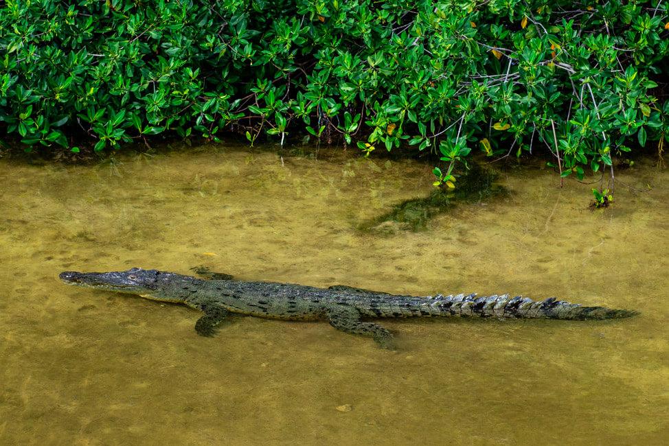 Punta Allen Sian Ka´an Nationalpark Lagune Meer Krokodil